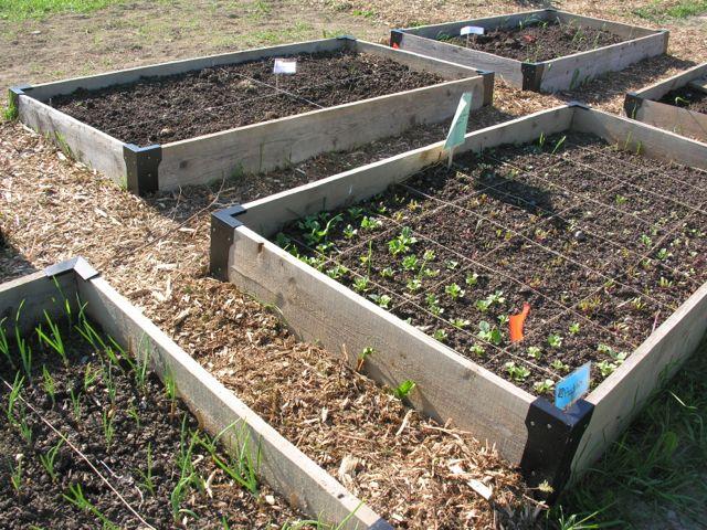 Presque Isle community garden