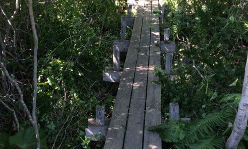 Deer Isle Stonington Elementary School nature trail