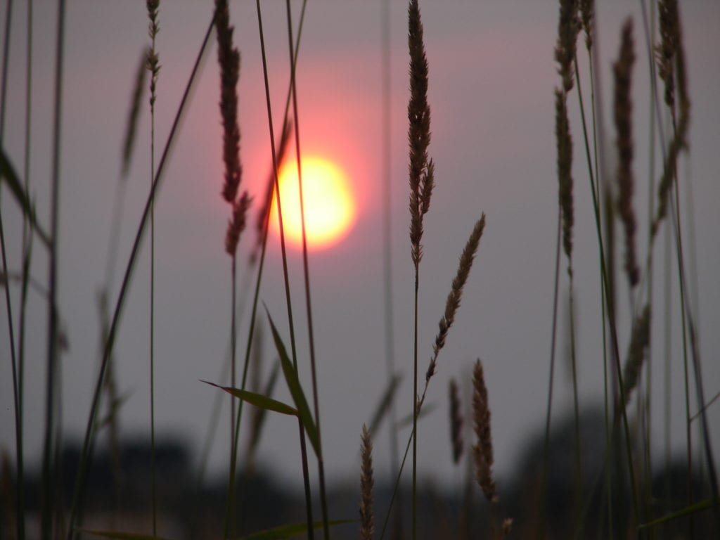 Sunset through tall grass