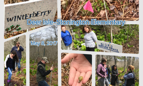 Deer Isle Stonington students collage 2017