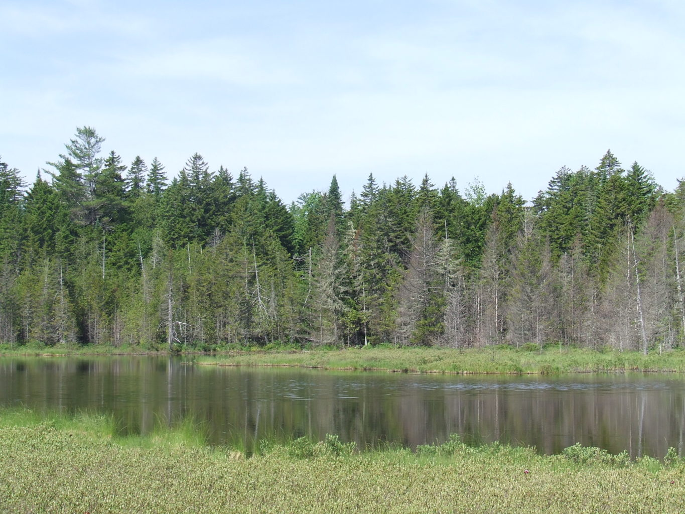 Lynx Pond, home to Rusty Blackbirds, a species of high conservation concern. (Allison Wells)