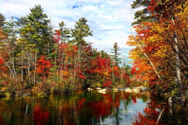 Presumpscot River Preserve by Mary Zambello