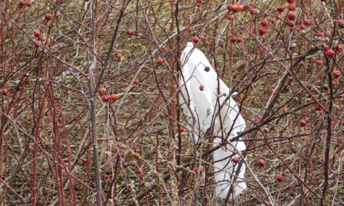 Plastic bag on Maine roadside