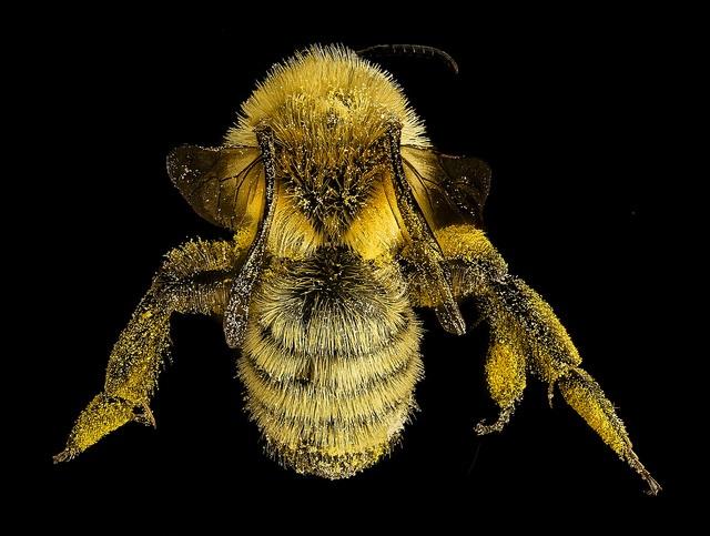 mining bee USGS