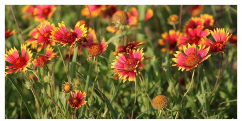 Plan Your Habitat Garden