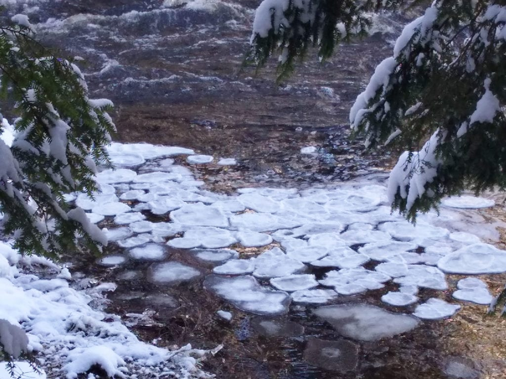 Pancake ice at Cathance River Preserve