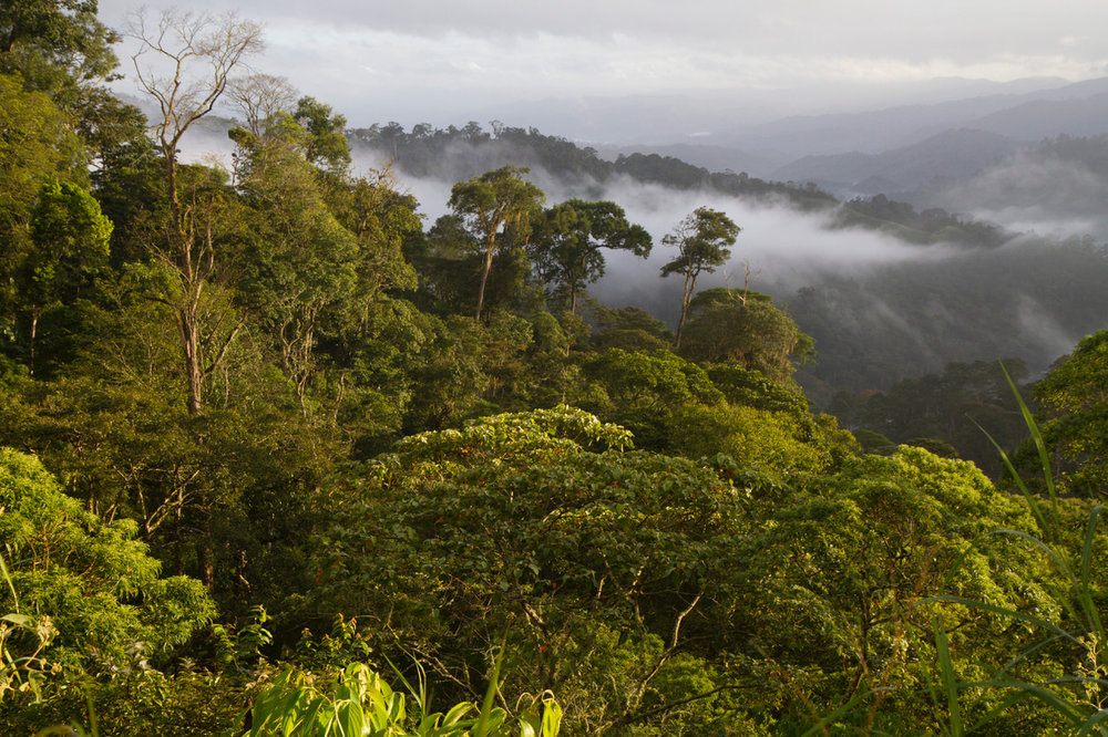 "What a ""Bird Friendly"" landscape looks like. Almost everything in this photo of the northern Nicaraguan highlands, to the horizon, is a traditional shade coffee farm, certified as both USDA Organic and ""Bird Friendly"" by the Smithsonian Migratory Bird Center. (©Scott Weidensaul))"