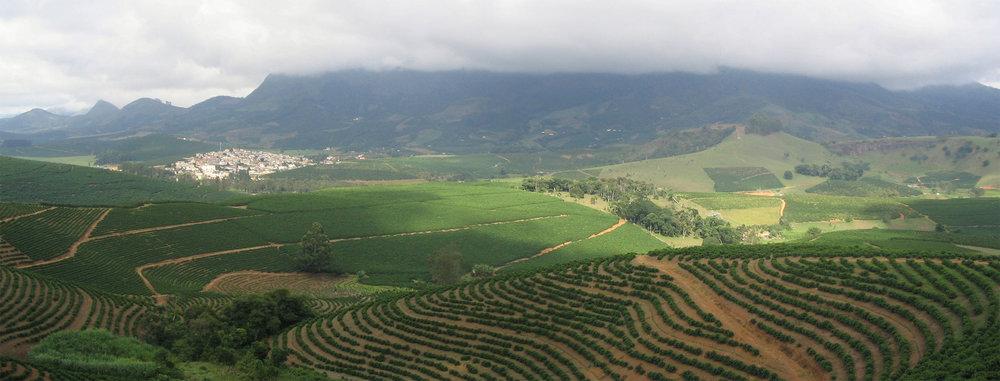 Sun-grown coffee plantation in Brazil.
