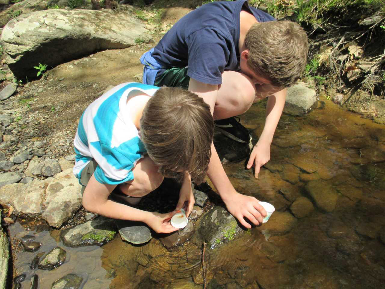 Students releasing salmon into Wescot Stream in Swanville