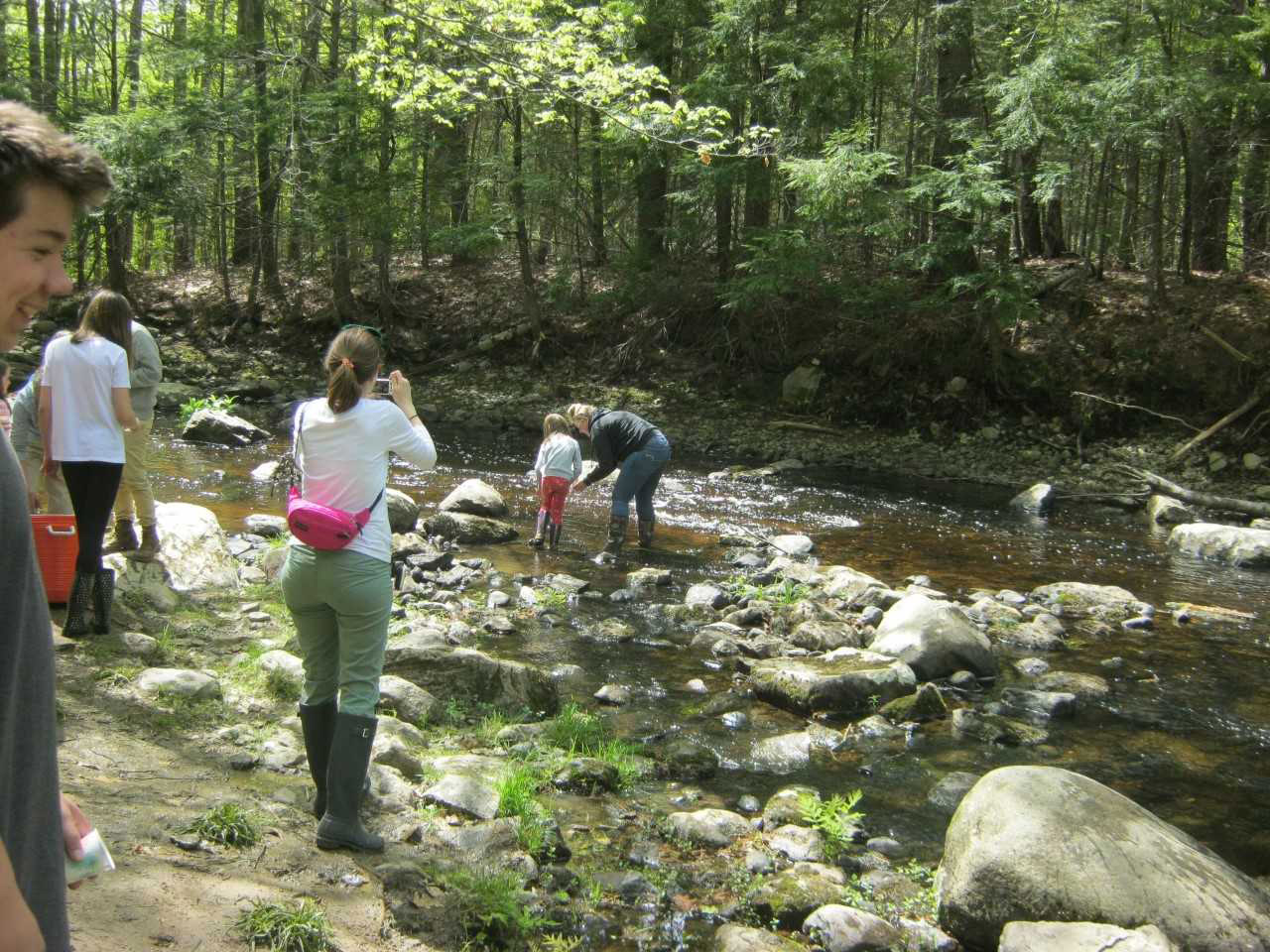 Students and teachers releasing salmon into Wescot Stream in Swanville