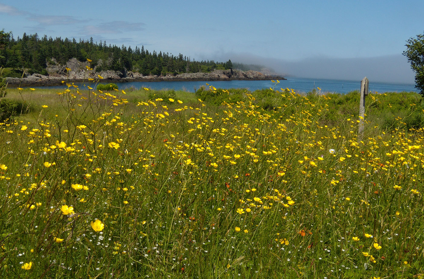 Flowers on the Bold Coast trail. Photo by Tom Meredith