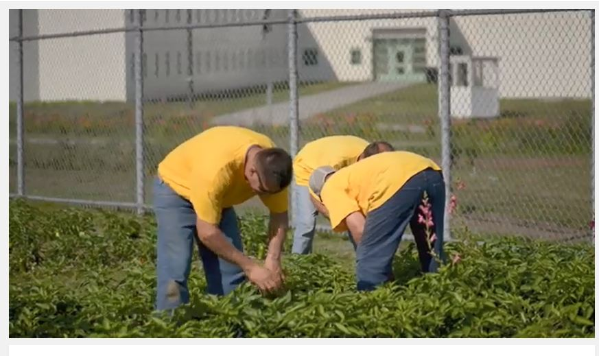 Maine State Prison Growing Food