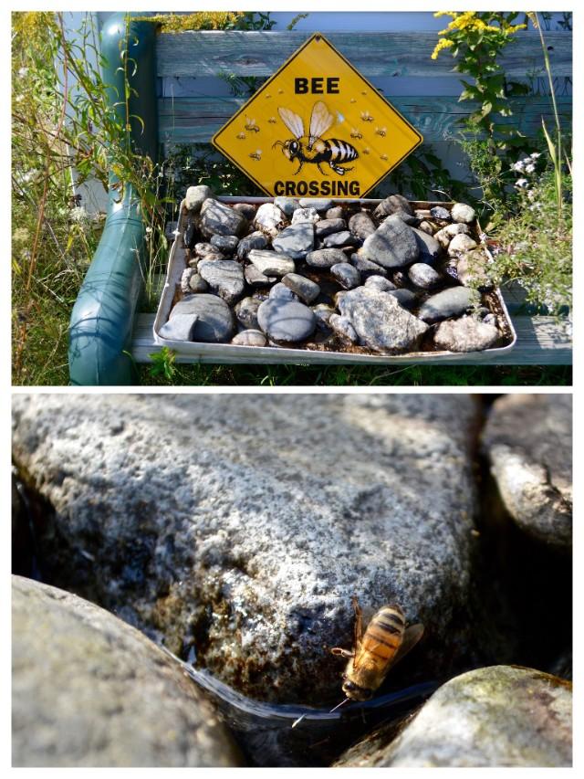 Bees at Highland Organics