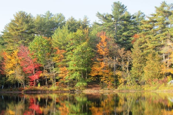 Pattee Pond in Winslow. Photo by Linda Woods