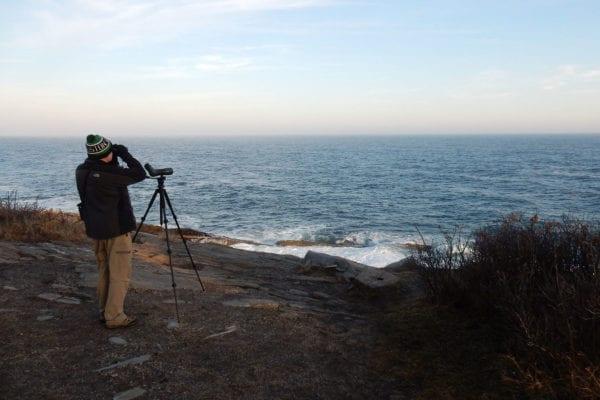Birding at Pemaquid