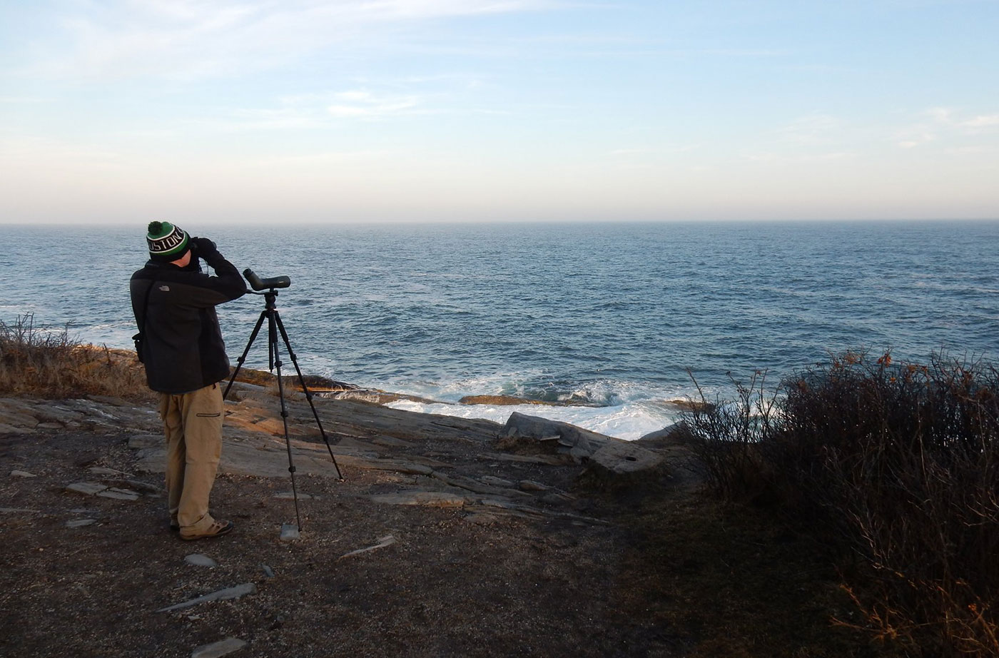 Birding at Pemaquid