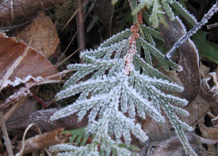 frosty-morning