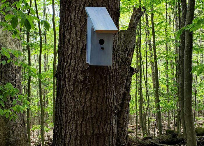 birdhouse on trail