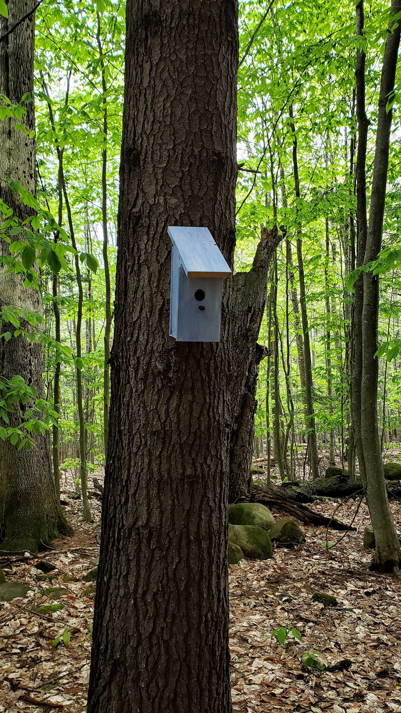 birdhouse on trail