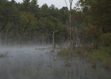 beaver-pond-wilton