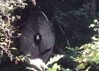 spider web in Gouldsboro