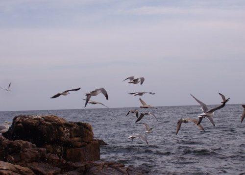 Gulls take flight