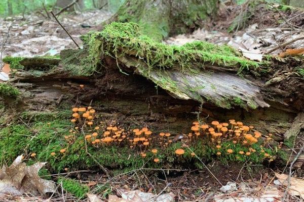 mushrooms in Wayne