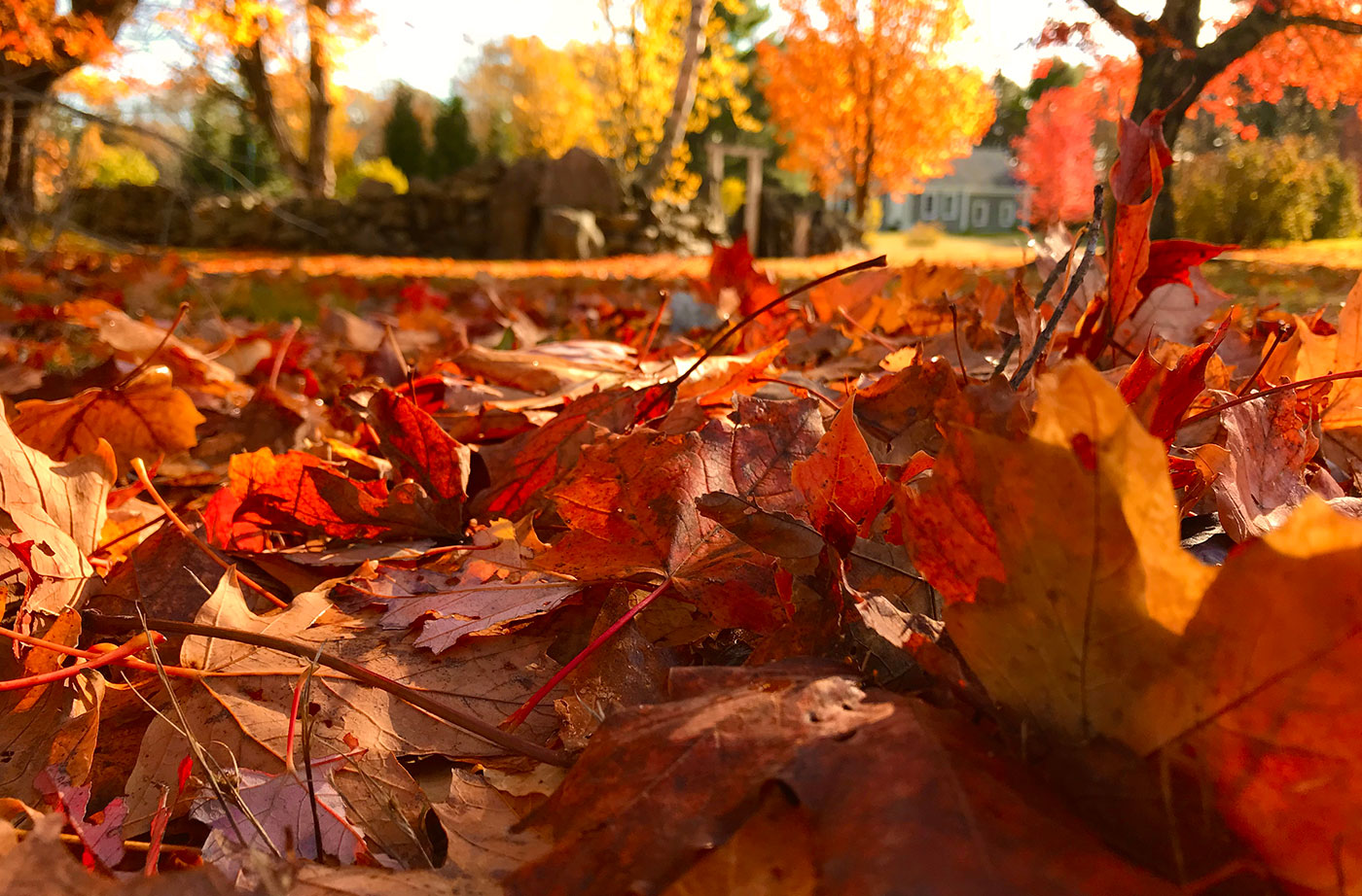 A Leaf in the Pile