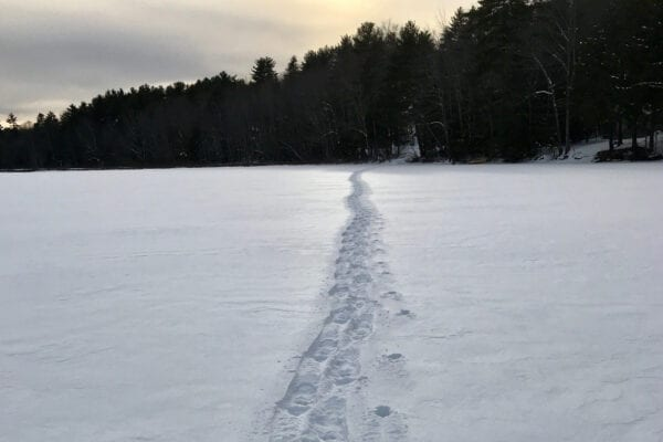 snowshoe tracks across Dyer Long Pond
