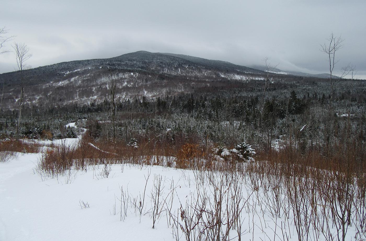 Hedgehog Hill in winter