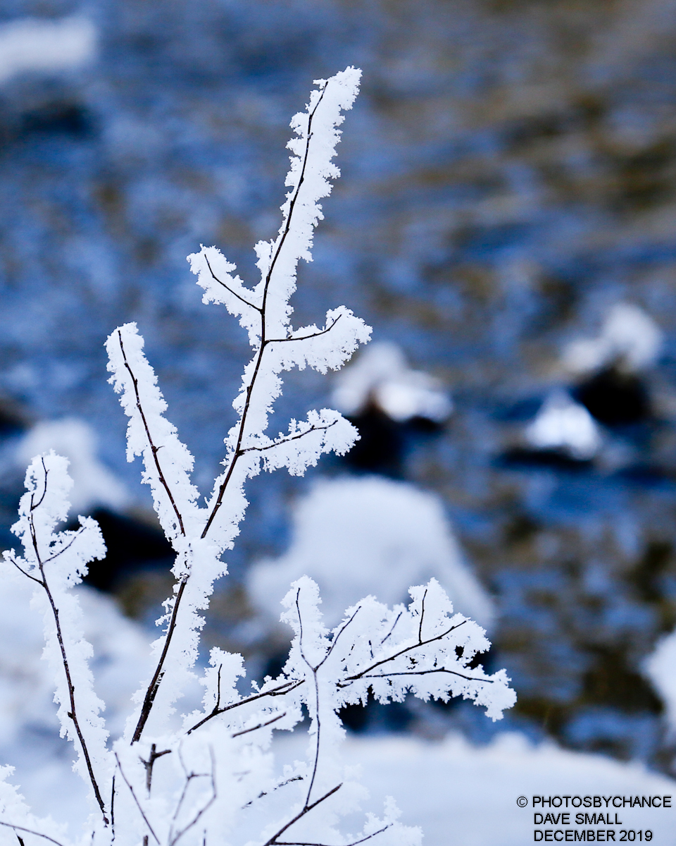 Frosty twigs at Hirundo Wildlife Refuge
