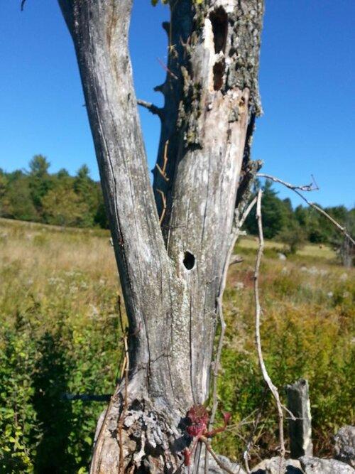 cavity tree in field