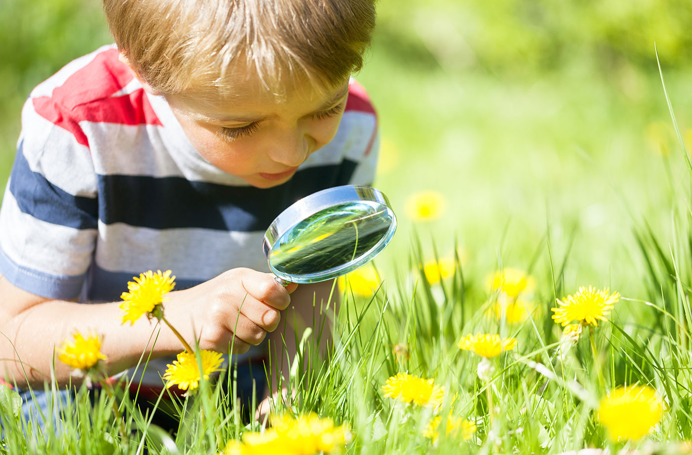 child with magnifying glass and dandelions