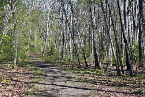 hiking trail at Maquoit Bay Conservation Land