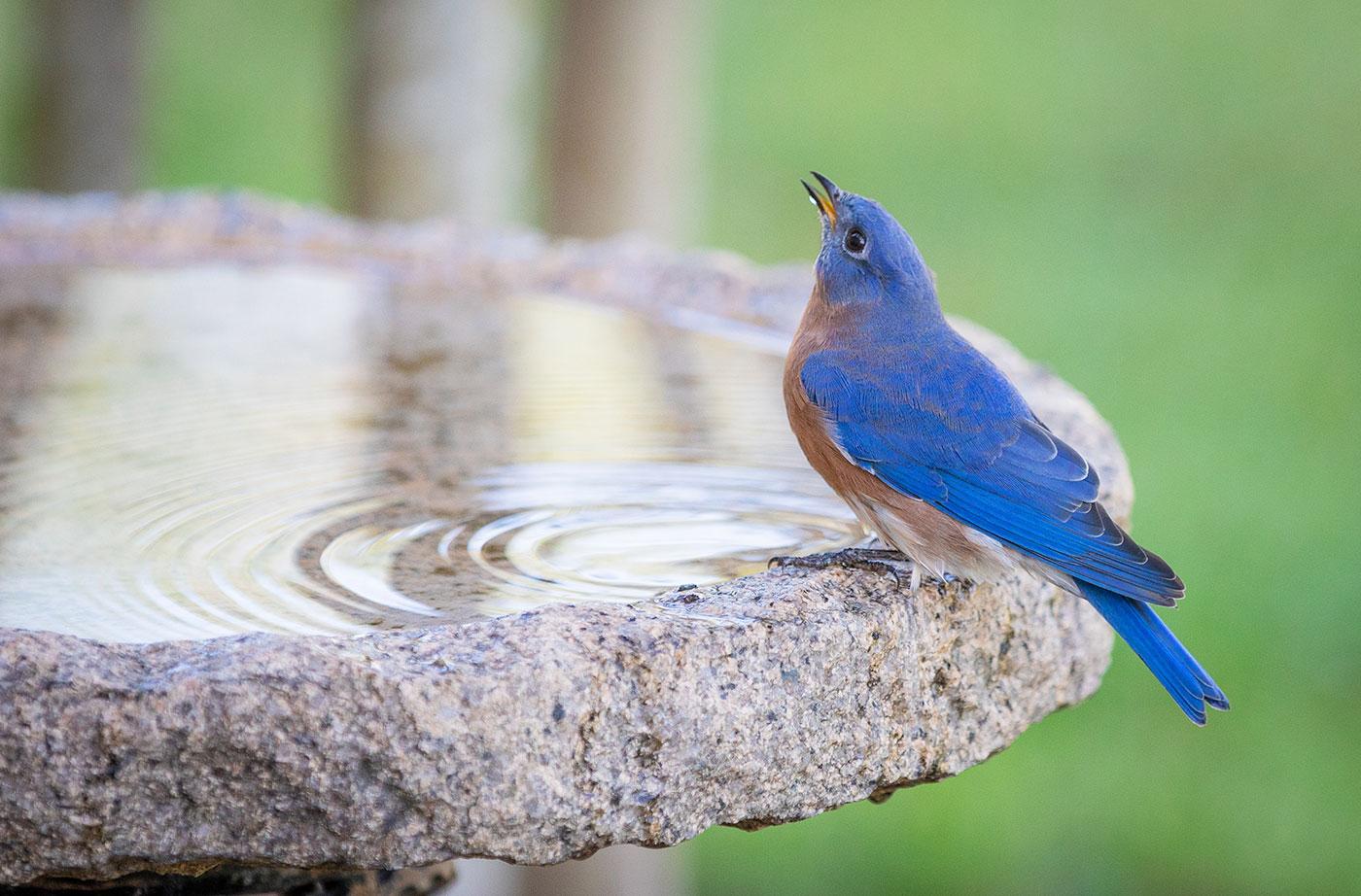 bird perched on bird bath
