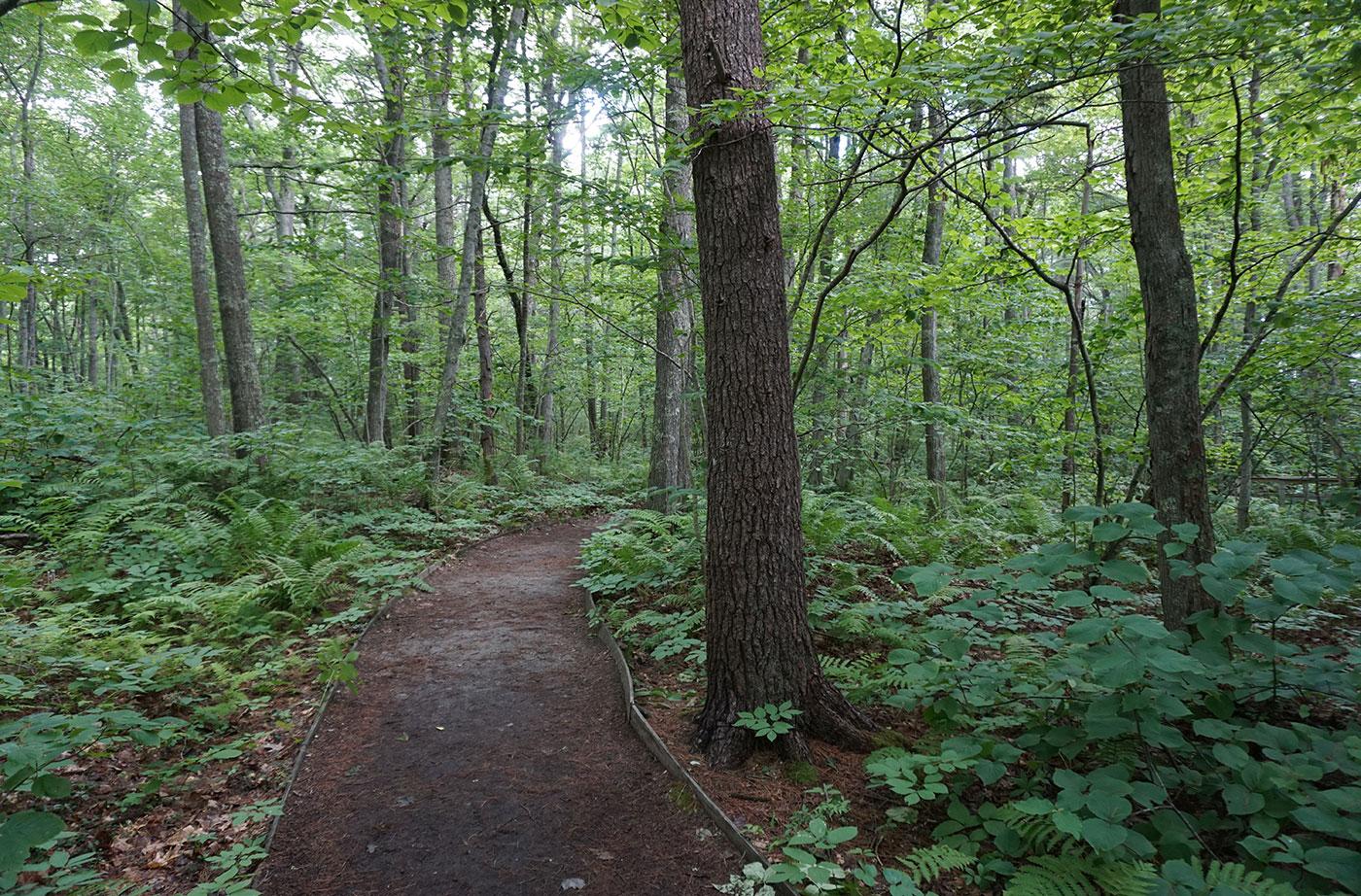 trees on Rachel Carson Trail