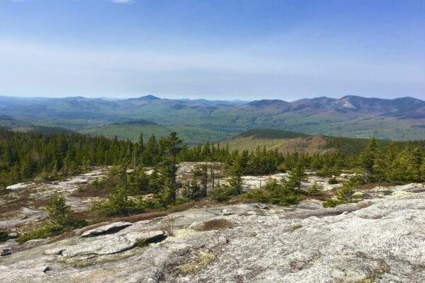 Caribou-Speckled Wilderness