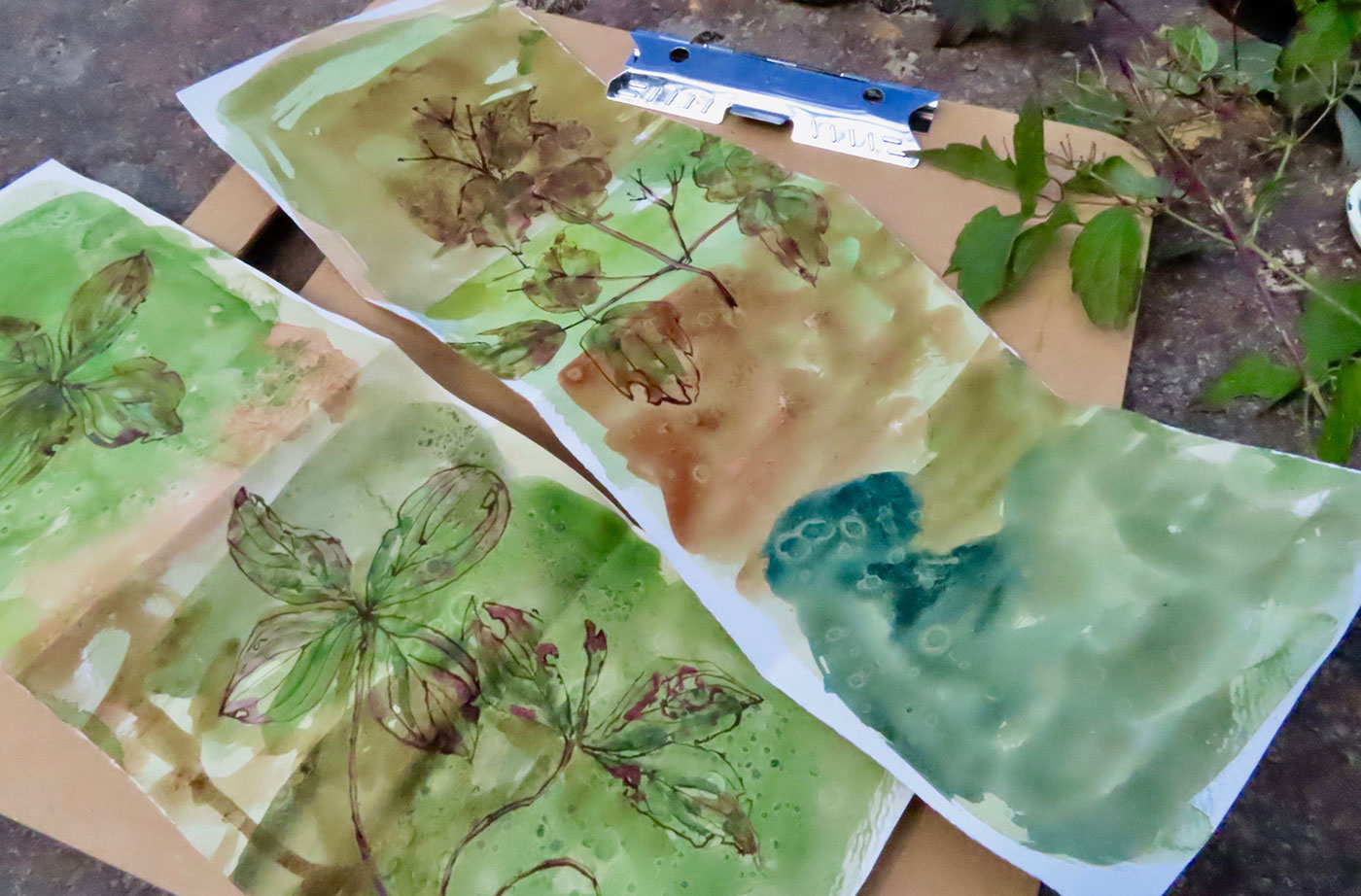 Botanicals artwork by Jill Osgood