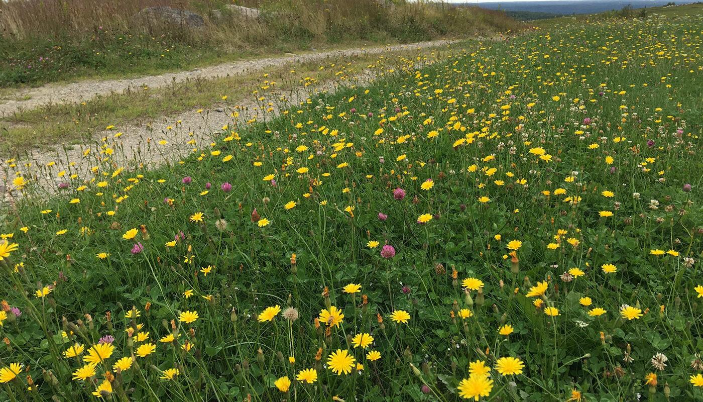 Clarry hill field