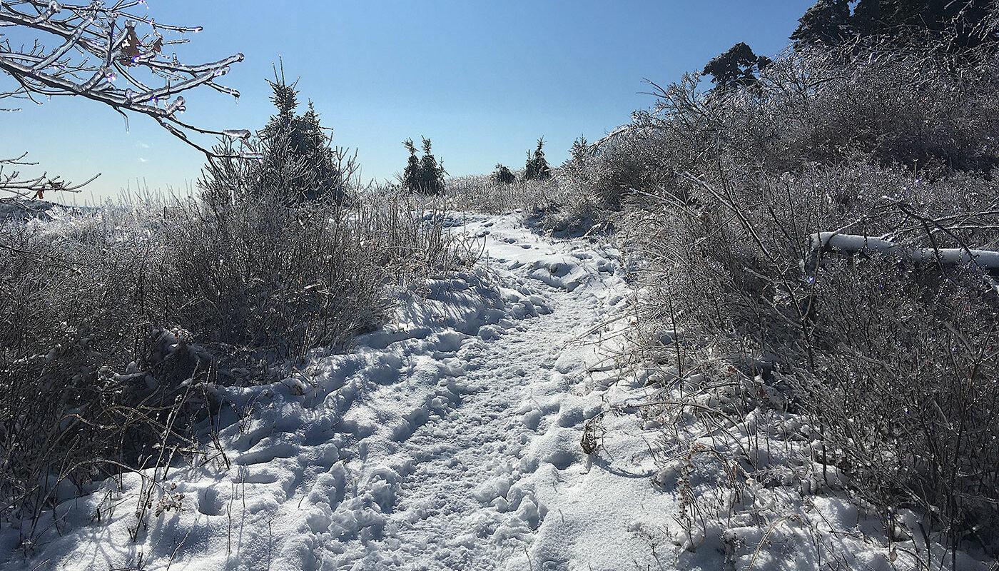 Beech Hill trail