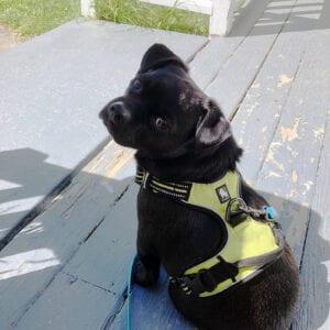 Loki ready for walk