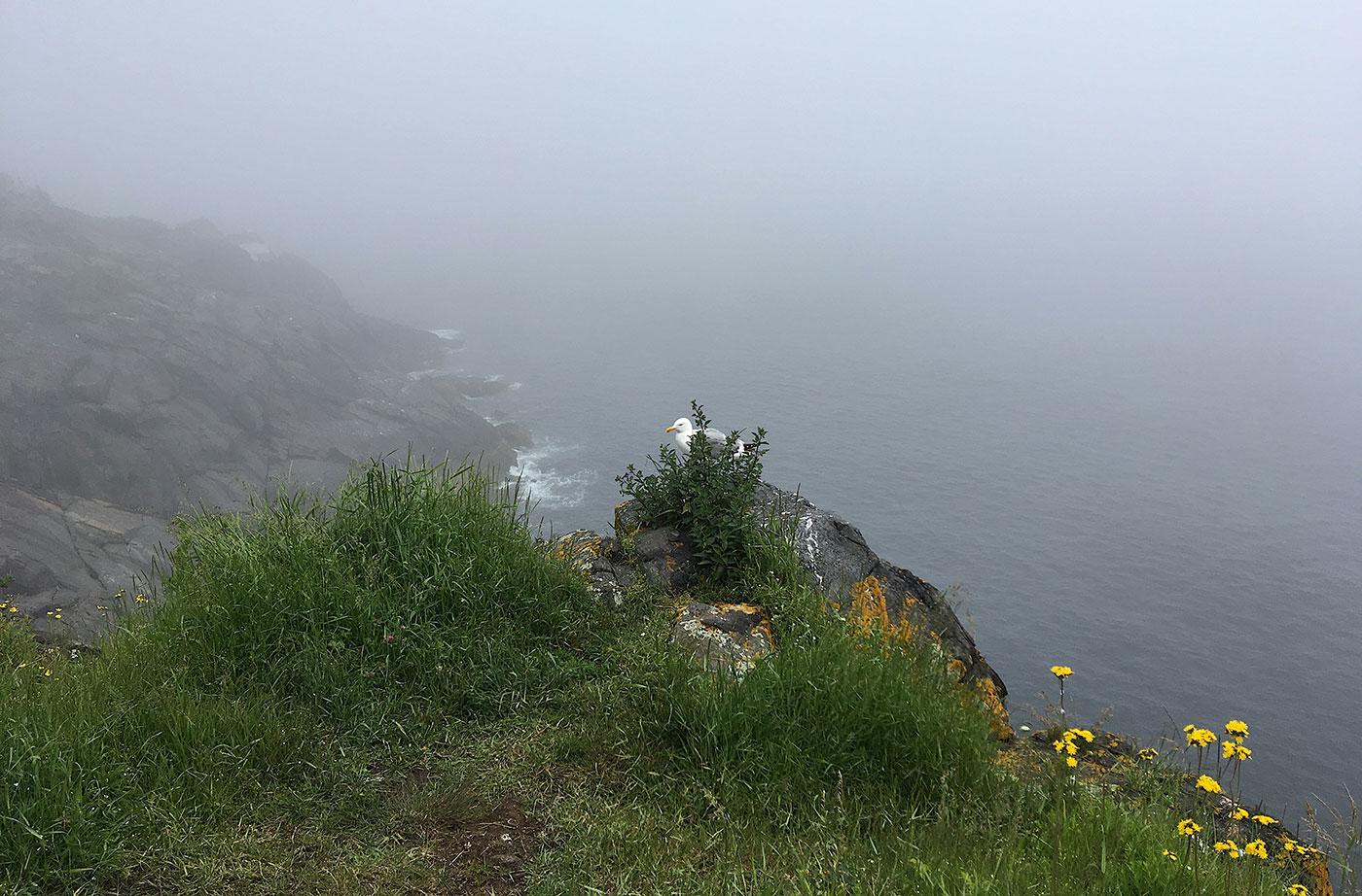 foggy coastal Maine shot on Monhegan
