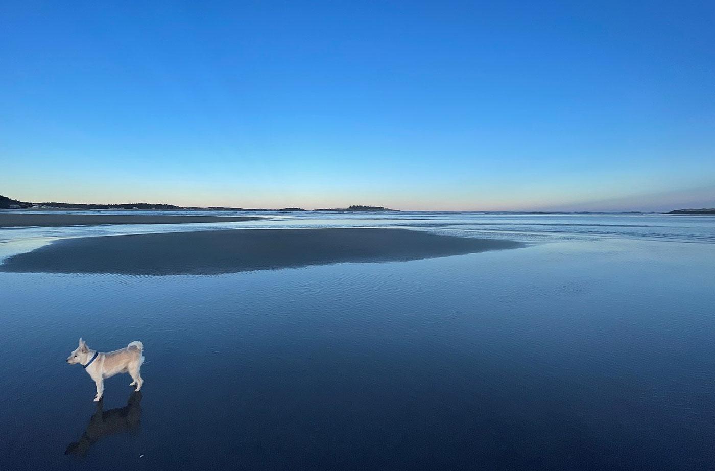 dog on Popham Beach
