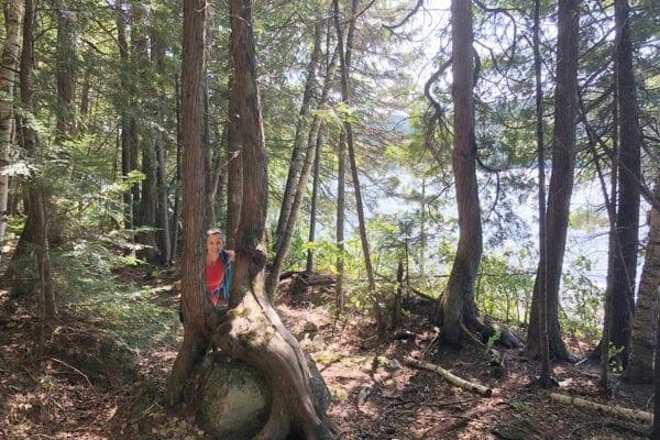 Heather in woods at Nahmakanta