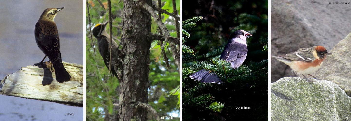 birds at KWW National Monument