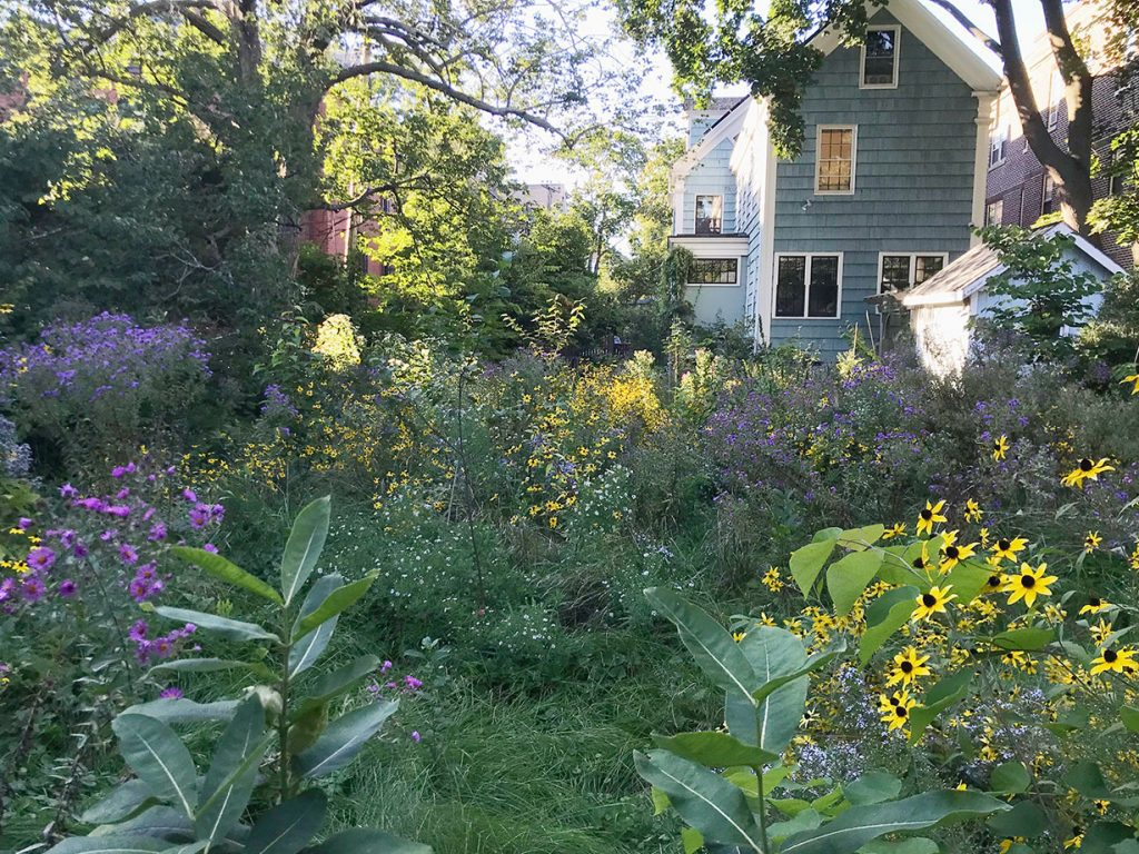 house and garden of native plants